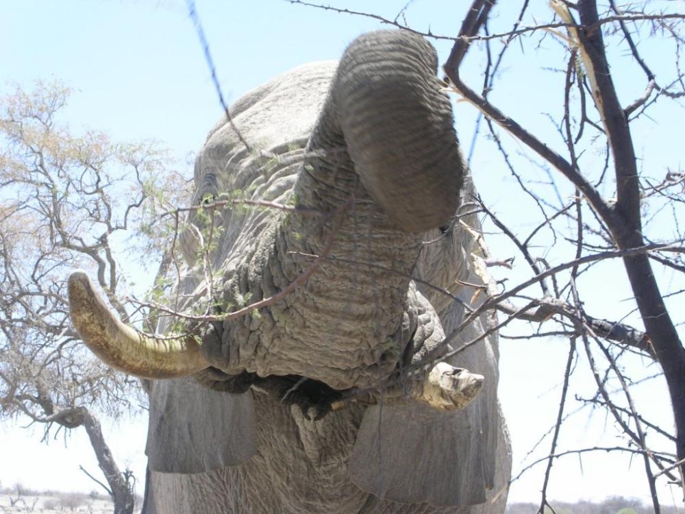 Elephant 1.jpg